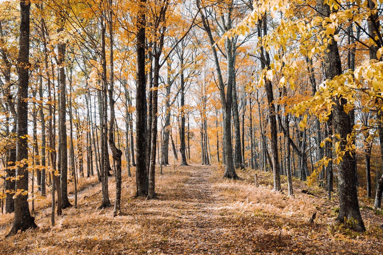limpiar hojas de otoño